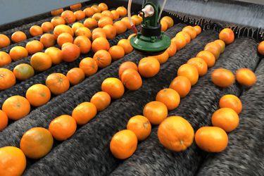 La innovación que extiende la vida de la fruta con un aditivo natural