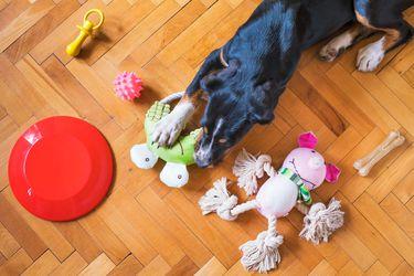Consejos para evitar que el perro muerda toda la casa