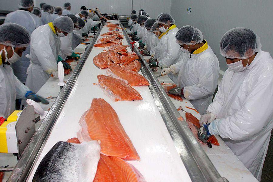 ARCHIVO Proceso de salmones