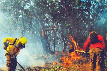 IX Región: ola de incendios destruye más de 2 mil hectáreas