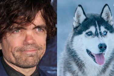 Peter Dinklage lidera campaña animalista para no comprar perros husky por moda de Game of Thrones