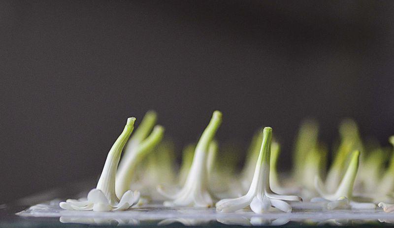 """""""Según la cantidad de flores de que se disponga, este proceso puede durar la temporada completa de floración de una planta y en ocasiones más de una primavera trabajando con una misma flor, para la obtención de unas cuantas gotas. Los perfumes desarrollados con este método artesanal son tesoros que jamás se podrán estandarizar ni formar parte de la producción industrial"""", dice Paloma Espinoza."""