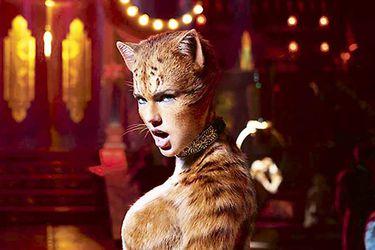 Imagen-CatsPW