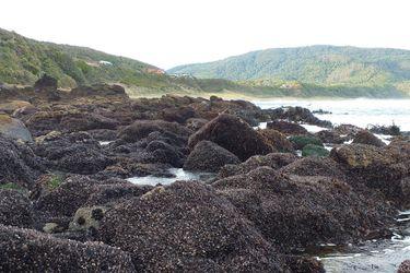 Más de tres años y más de mil kilómetros de costa: estudio simuló el impacto que tendría la pérdida de especies claves para el ecosistema marino en Chile