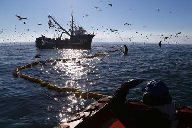 """Gobierno por embarcaciones chinas en territorio chileno: """"Ni la Armada ni nosotros hemos detectado ningún incumplimiento"""""""