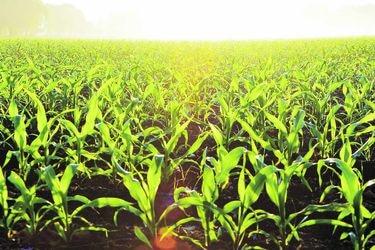 Agroindustria chilena acelera el paso hacia una economía circular