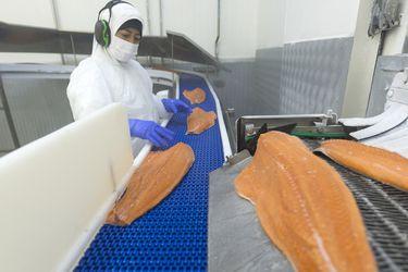 Exportaciones de salmón se recuperan en volumen, pero precios caen casi 11% en el primer trimestre