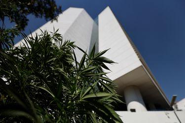 México apuesta por el mercado legal de la marihuana al despenalizar su uso recreativo