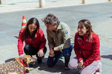 Petpelusa: Este domingo la Subdere dispondrá de dos mil microchips gratuitos para perros y gatos