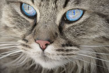 ¿La gata o yo? Peleas en Pandemia (3ª parte, recordando a Humberto Maturana)