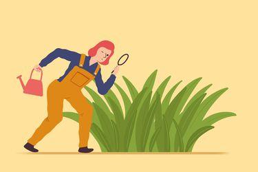 No es llegar y sacar: 9 consejos para desmalezar con eficiencia
