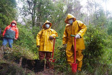 Los árboles nativos que buscan proteger el agua: relatos desde La Araucanía