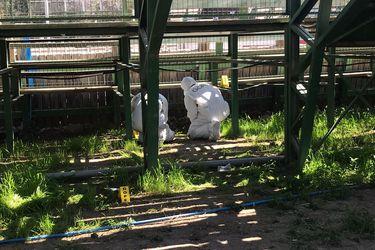 Gope desactiva artefacto explosivo en medialuna de Nos en San Bernardo: aún no hay detenidos