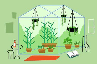 Plantas en invierno: cómo cuidarlas y no fallarles durante las bajas temperaturas