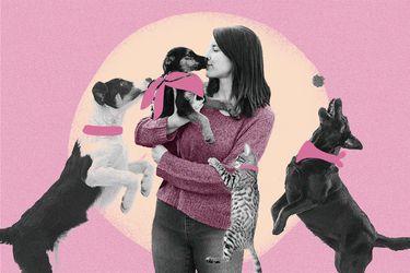 En búsqueda de una mascota: Lugares para la adopción