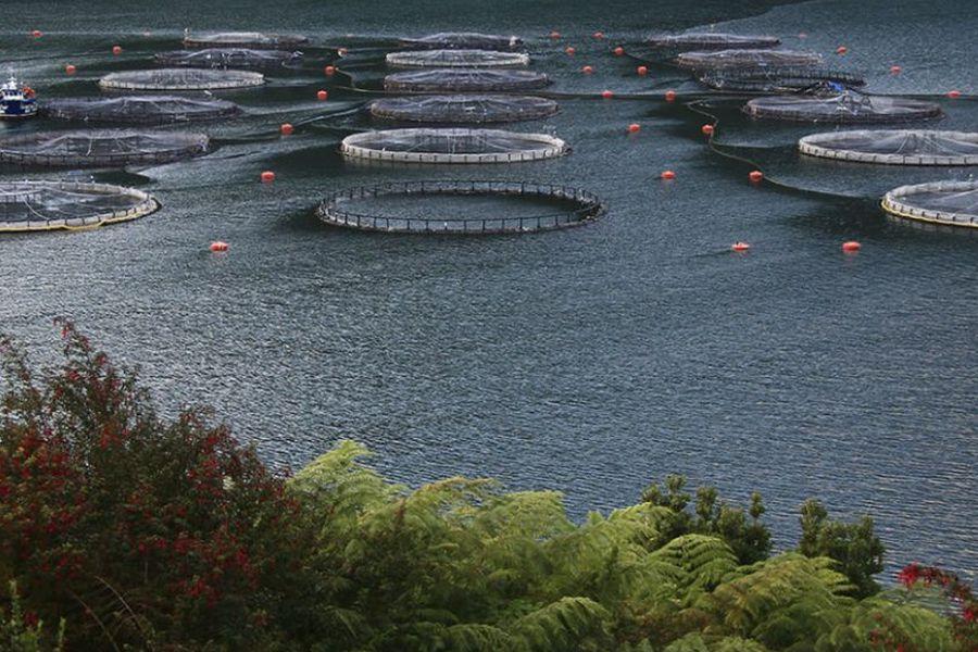 camanchaca salmones