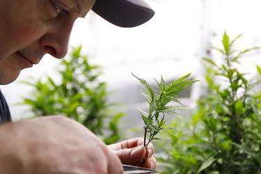 Congreso mexicano aprueba histórico proyecto de legalización de cannabis