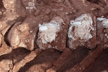 Hallan fósiles de dinosaurio que sería el más grande la historia