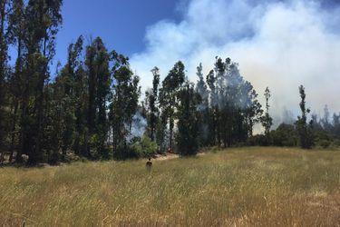 Controlan incendio forestal en Valparaíso y declaran Alerta Amarilla comunal