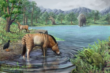 Estudio revela que Tagua Tagua fue el sitio con mayor  diversidad de fauna del Chile de la Edad del Hielo