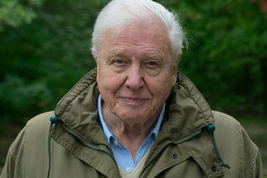 Una carta de amor para el planeta: las memorias de David Attenborough en Netflix