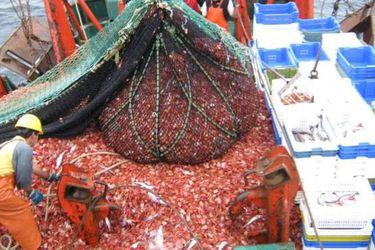 Comisión del Senado aprueba fin a renovación indefinida de licencias industriales de pesca