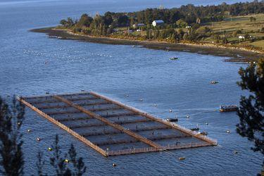 Tras un duro 2020, envíos de salmón crecerían impulsados por reactivación y nuevos canales de venta
