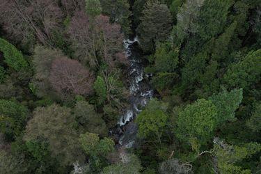 Estudio de Unesco da cuenta de la relación entre masa forestal y disponibilidad hídrica en Chile