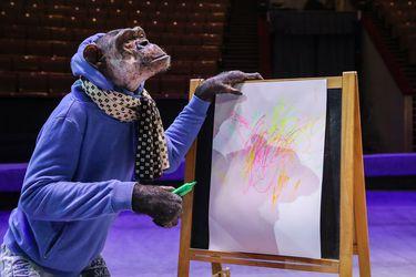 El increíble experimento en que científicos introdujeron genes humanos en un simio para aumentar el tamaño de su cerebro