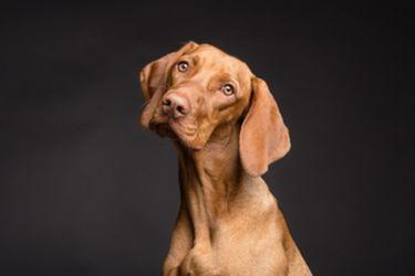 Perrut: La app que quiere hacer más fácil la búsqueda de perros perdidos