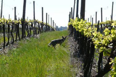 La viña más grande de Chile se integra a importante red global de biodiversidad