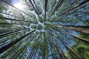 El poder real de mitigación de los bosques