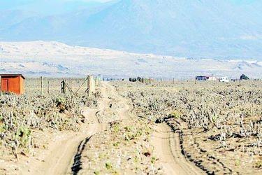 Minera Dominga defiende su evaluación ambiental ad portas de alegatos judiciales