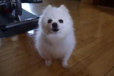 Fallece Gabe the Dog, el perro cantante estrella de Youtube