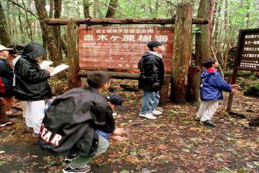 La triste historia del bosque japonés donde Logan Paul grabó un suicidio