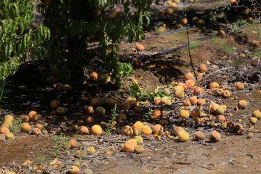 Gobierno decreta emergencia agrícola para regiones de O'Higgins y del Maule, y anuncia fondo de ayuda económica