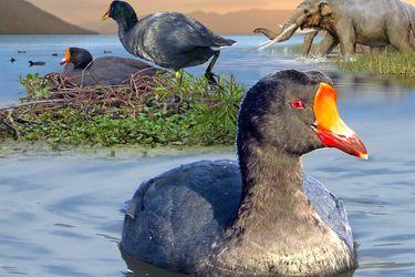 Científicos descubren una gigantesca ave extinta hace 12 mil años que habitó la zona central de Chile durante la Era del Hielo