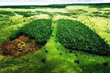 ¿Por qué hoy se celebra el Día de la Tierra?
