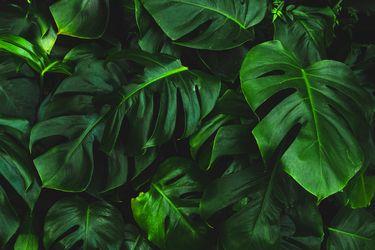 Guía para cuidar plantas de interior