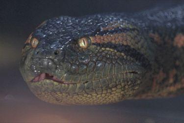 Sony está desarrollando una nueva película Anaconda
