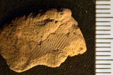Descubren una milenaria huella dactilar en una cerámica neolítica