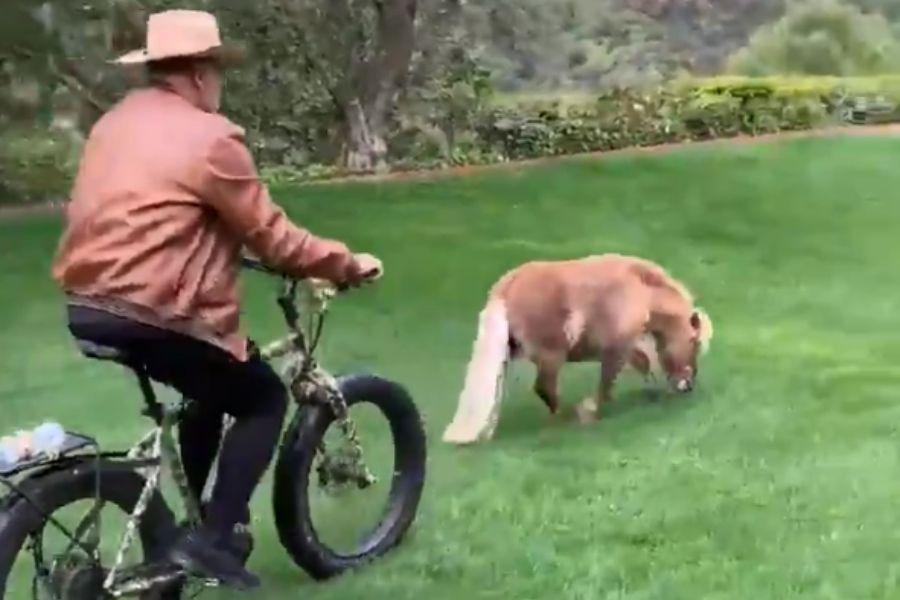 arnold vs pony