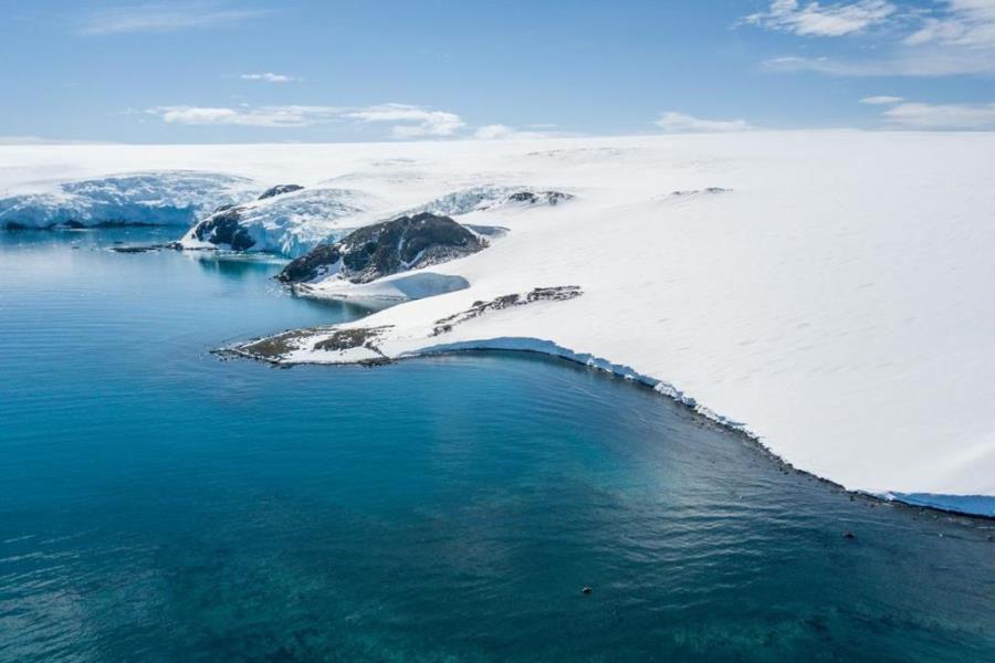 antártica cordero