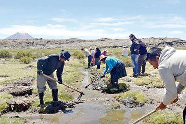 Comunidades originarias recuperan bofedales en el altiplano de Tarapacá