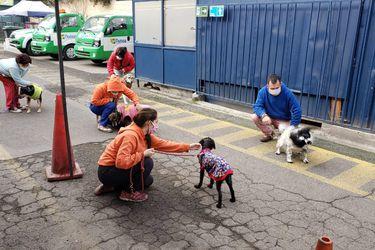 Registro nacional de mascotas: Casi 1,3 millones de perros y gatos han sido inscritos