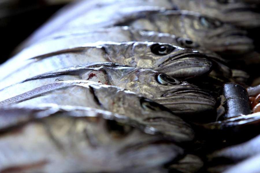 CONCEPCION Venta de Pescados y mariscos vispera Semana Santa