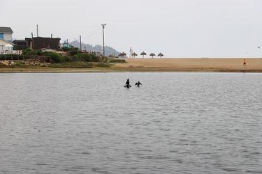 Los primeros pasos por la protección del Humedal La Laguna en Zapallar: 10 hectáreas con taguas, gansos y patos