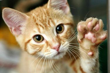 Tigres y gatos con coronavirus: mascotas también deberían hacer cuarentena