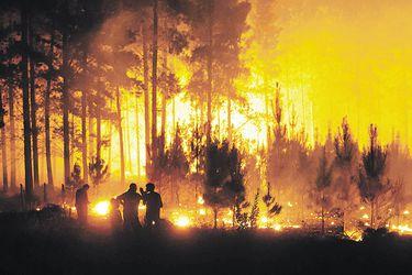 SNA pide penas ejemplares para responsables de incendios y lamenta pérdidas de predios