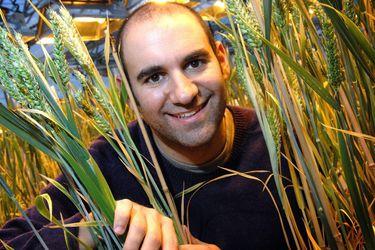 ¿Es mejor la harina integral? Cristóbal Uauy, el científico chileno que ayudó a descifrar el genoma del trigo, ahora busca cómo potenciar este alimento